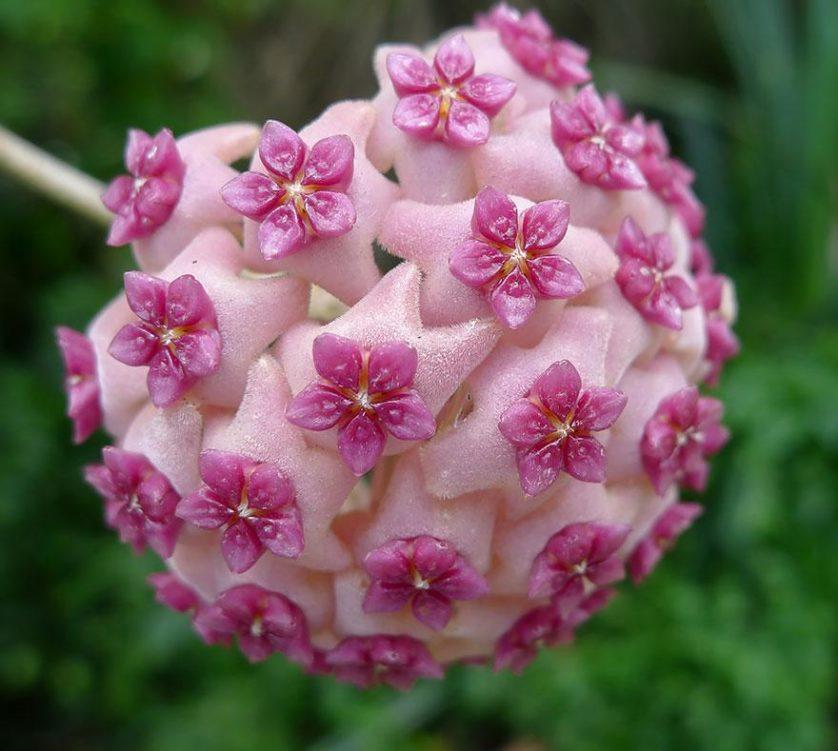 piante geometriche 10