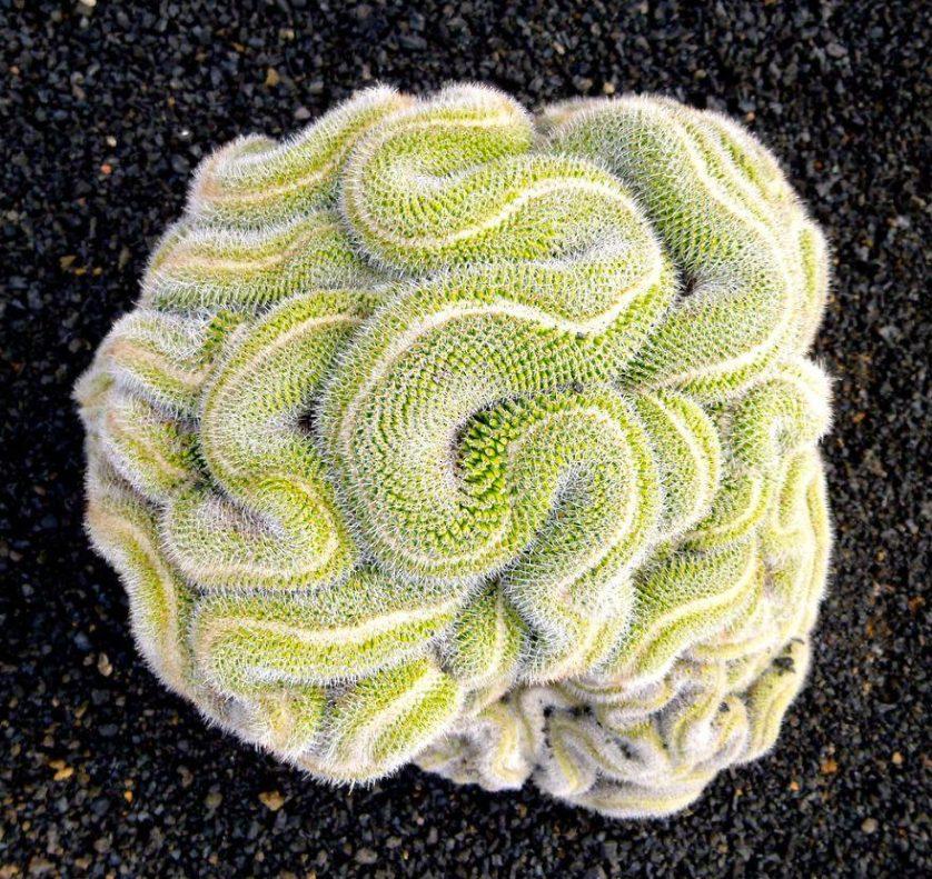 piante geometriche 11