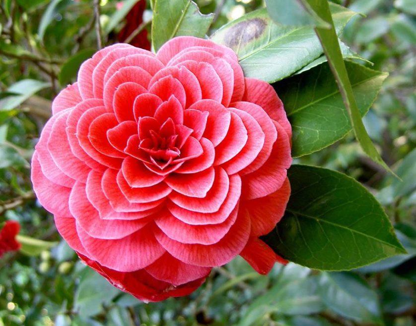 piante geometriche 13