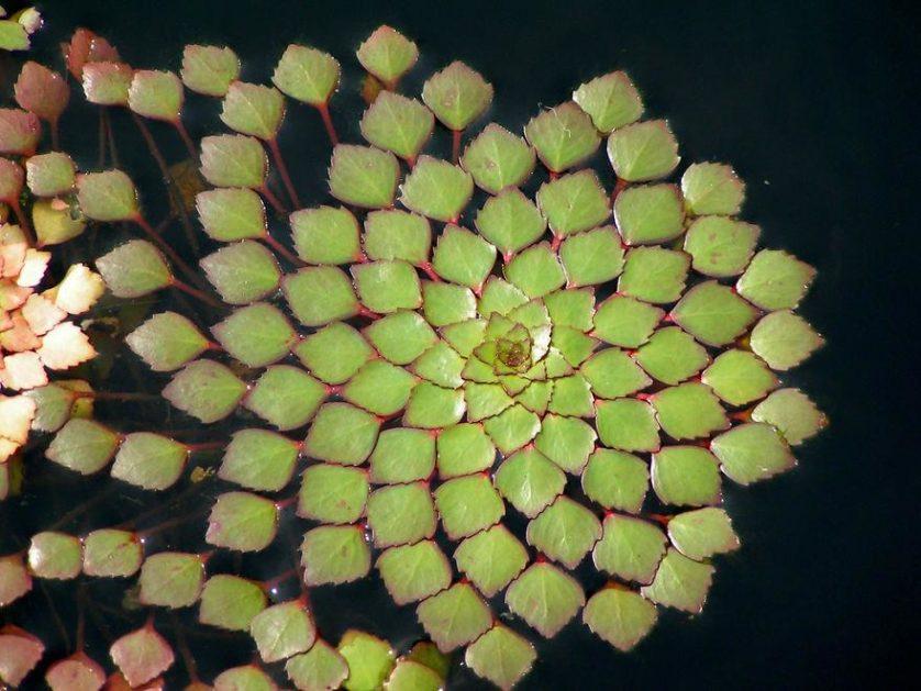 piante geometriche 16