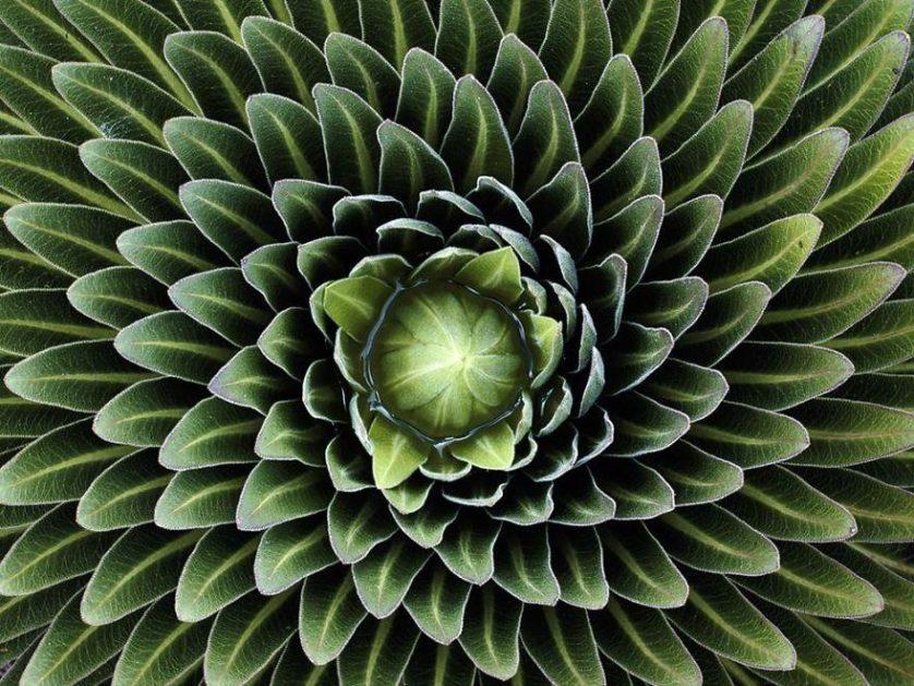 piante geometriche 18