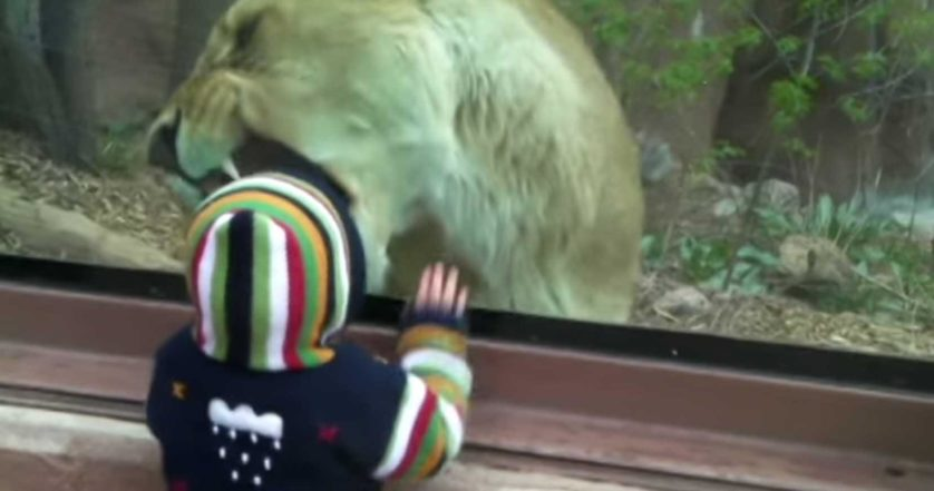 leoa comer bebe