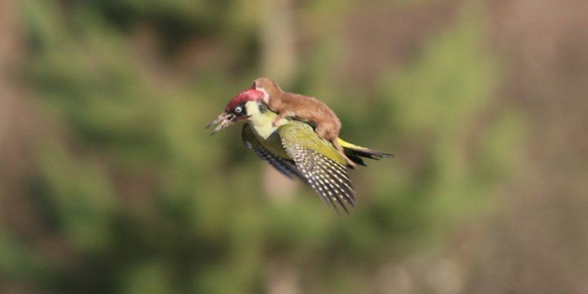 animais pegando carona em outros animais 5