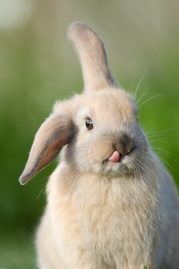 coelhos mais fofos (13)