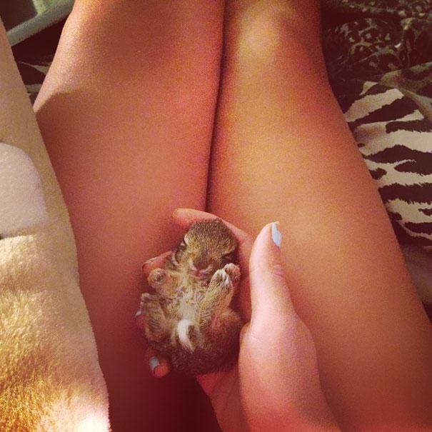 coelhos mais fofos (17)