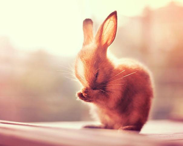coelhos mais fofos (24)
