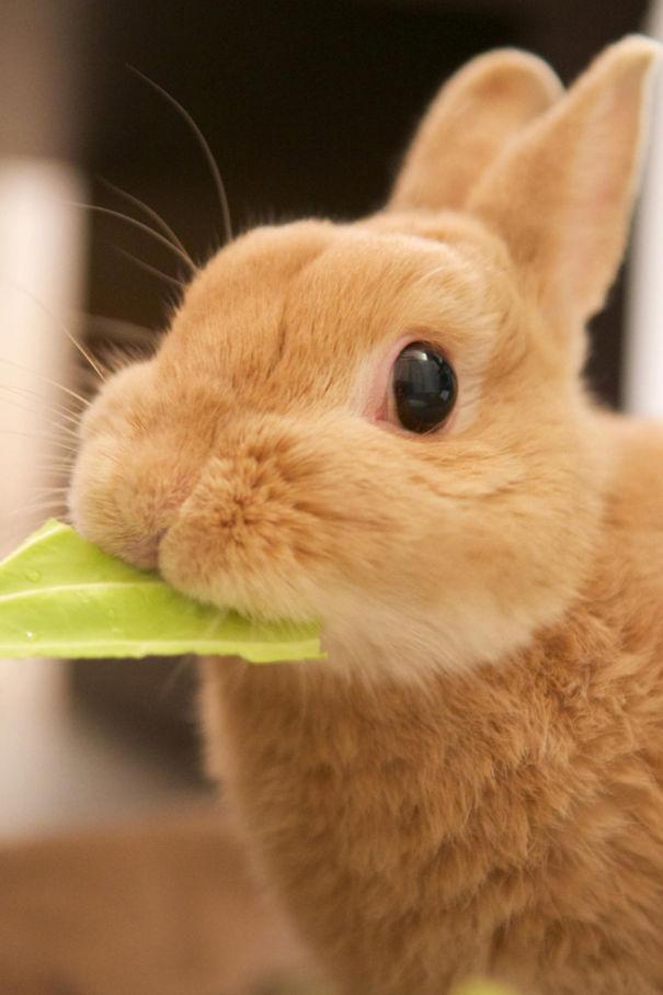 coelhos mais fofos (5)