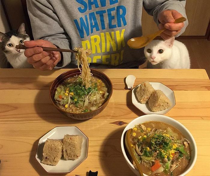 https://i0.wp.com/hypescience.com/wp-content/uploads/2016/03/gatos-ver-seus-donos-comerem-12.jpg