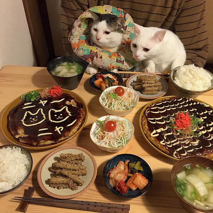 https://i0.wp.com/hypescience.com/wp-content/uploads/2016/03/gatos-ver-seus-donos-comerem-14.jpg