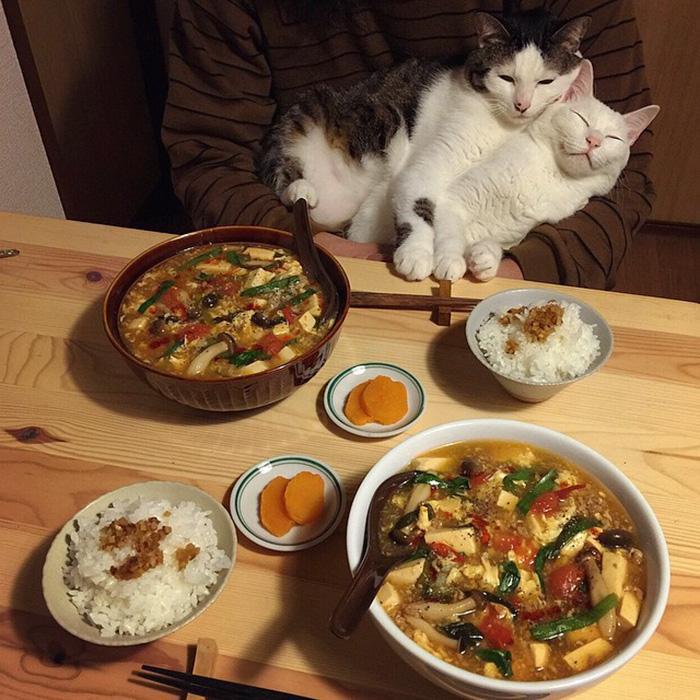 https://i0.wp.com/hypescience.com/wp-content/uploads/2016/03/gatos-ver-seus-donos-comerem-3.jpg