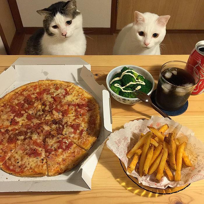 https://i0.wp.com/hypescience.com/wp-content/uploads/2016/03/gatos-ver-seus-donos-comerem-4.jpg