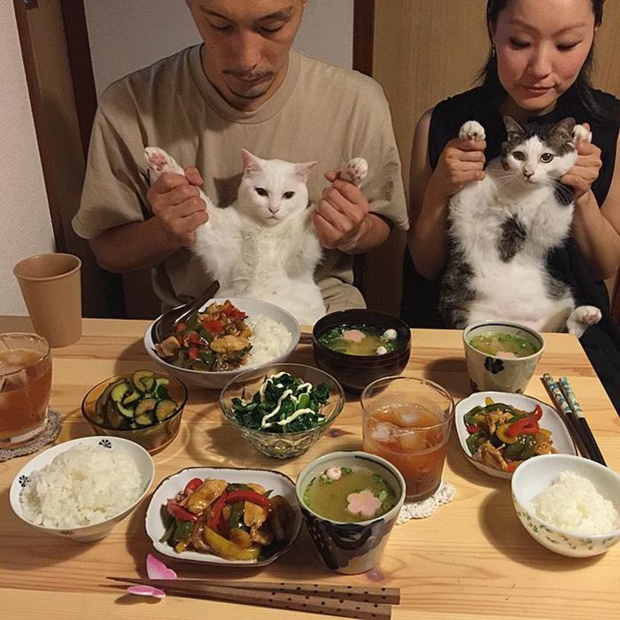 https://i0.wp.com/hypescience.com/wp-content/uploads/2016/03/gatos-ver-seus-donos-comerem-5.jpg