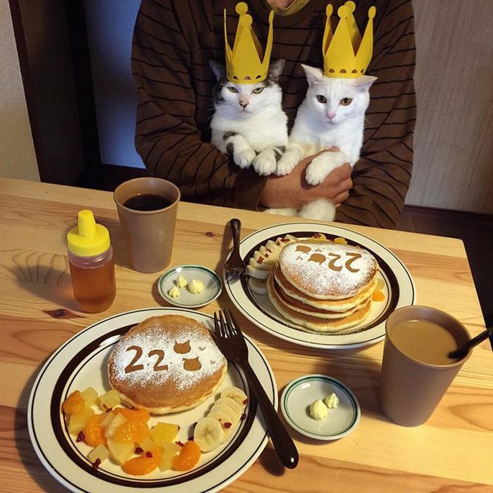 https://i0.wp.com/hypescience.com/wp-content/uploads/2016/03/gatos-ver-seus-donos-comerem-6.jpg
