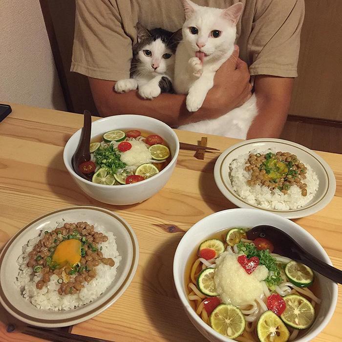 https://i0.wp.com/hypescience.com/wp-content/uploads/2016/03/gatos-ver-seus-donos-comerem-9.jpg