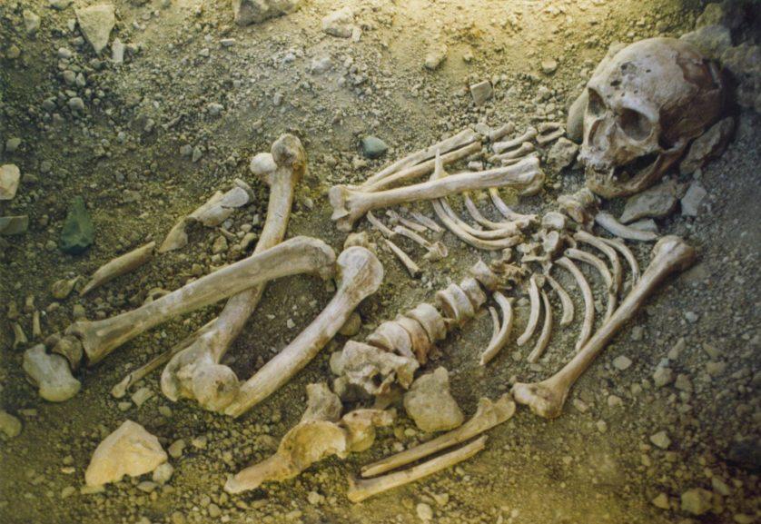 neandertais 2