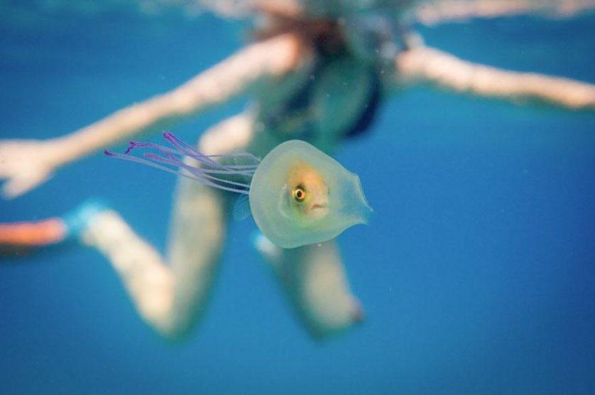 peixe e agua viva