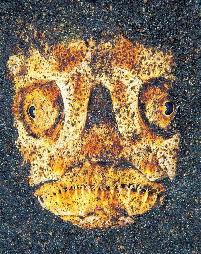 assustadoras-criaturas-marinhas-17