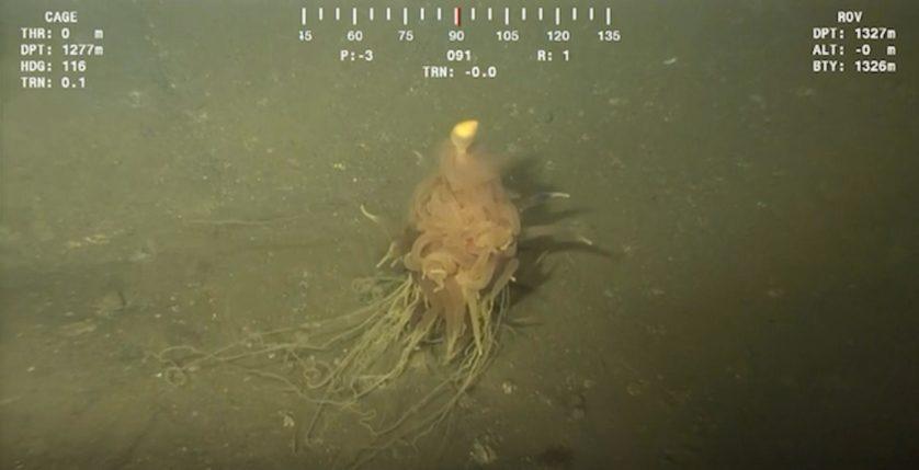 assustadoras-criaturas-marinhas-2