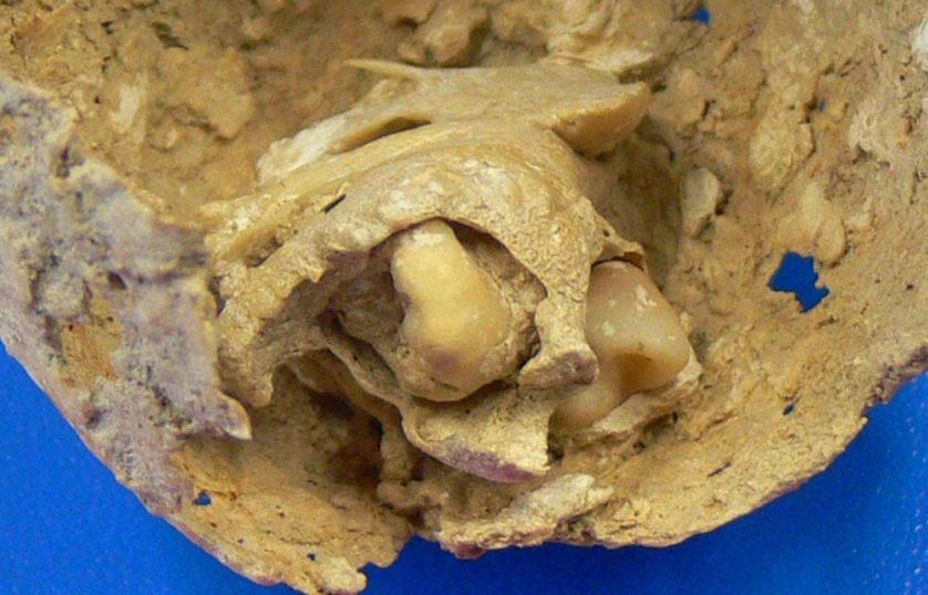 assustadoras-descobertas-arqueologicas-4