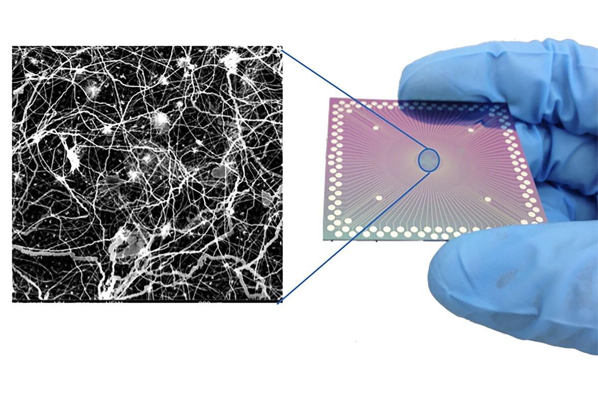 Pesquisadores observam comportamento cerebral em dispositivo em nanoescala