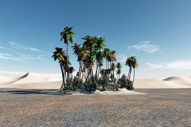 Palmeiras nascem de sementes de dois mil anos encontradas em Israel