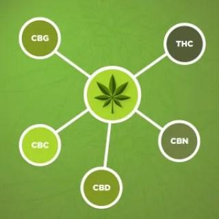 cannabinoid graphic