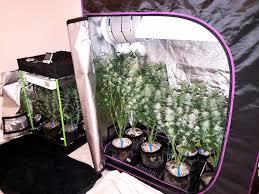 cannabis grow space