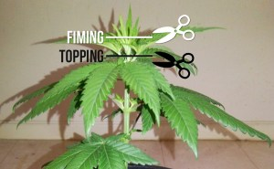 topping plants