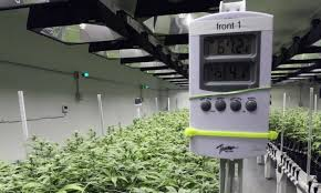cannabis controls and meters