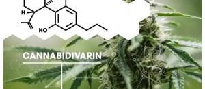 cannabidivarin cbdv