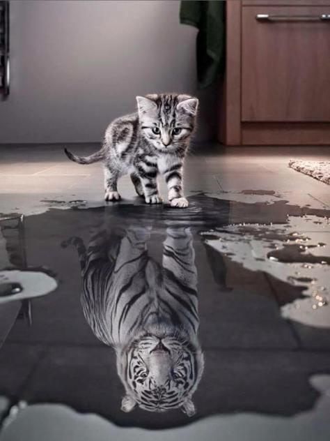 Chaton_Tigre