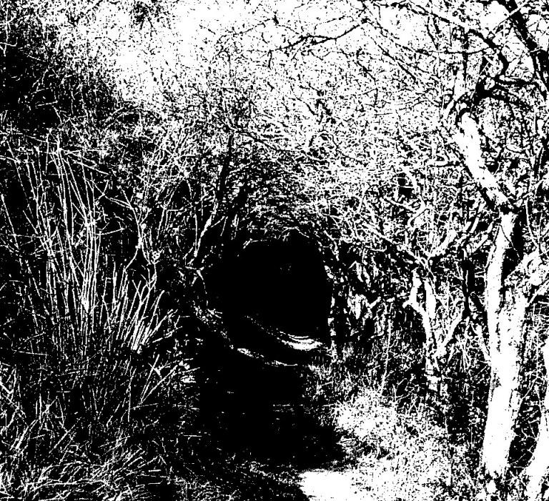 Chemin Tunnel Végétal