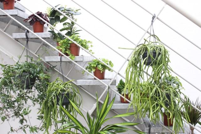 Deutscher Interior Blog Planzenfreunde Pflanzen
