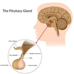 what are the diseases of the pituitary gland