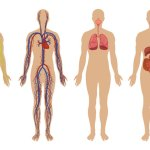 Helpful Medical Photos of the Human Body