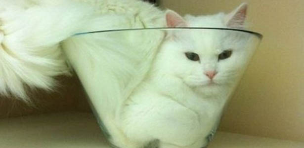 Top 5 Pictures of Weird Looking Cat Breeds – Hyptor
