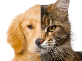 Dog-Vs-Cat