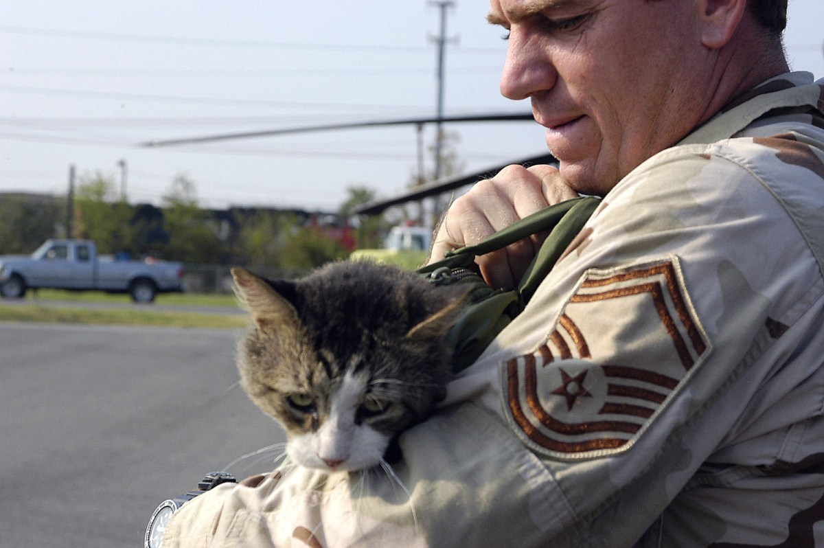 5 Real Cat Heroes Who Saved Life – Amazing Actions Done By Cats