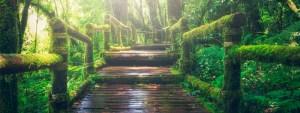 Hyvän Olon Idea - Metsäpolku