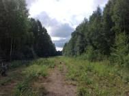 Junarataa metsässä.
