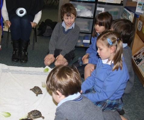 Year 1 tortoise visit