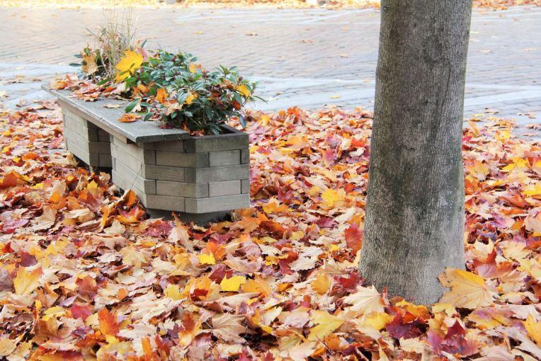 automne prenzlauer berg berlin