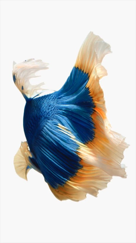 Download all of Apple's new iPhone 6s wallpapers ...