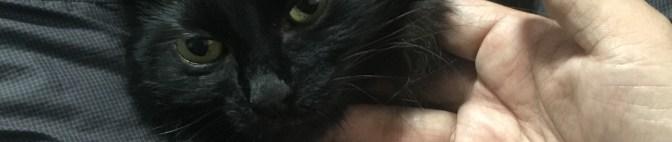 革の鞄と猫のおしっこについてのココロだ