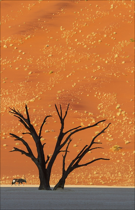 Deadvlei Desert Namibia, Photo taken by Ian Parker, but photoshopped. He placed a gazelle near the tree. It does not have any shadow.