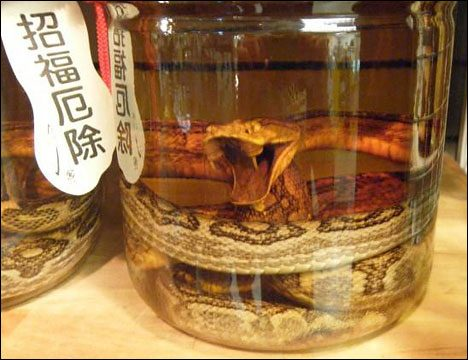 Limits Good Taste habu-sake-japanese-snake-wine