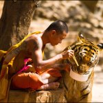 Tiger Temple raided closed