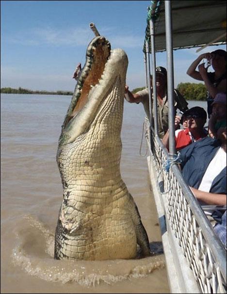 top 10 funny tourist snapshots crocodile
