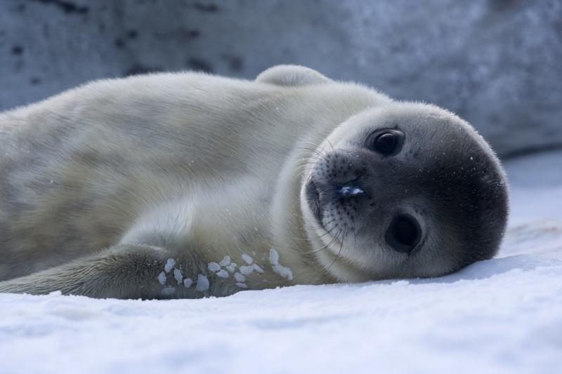 Tourism Antarctica