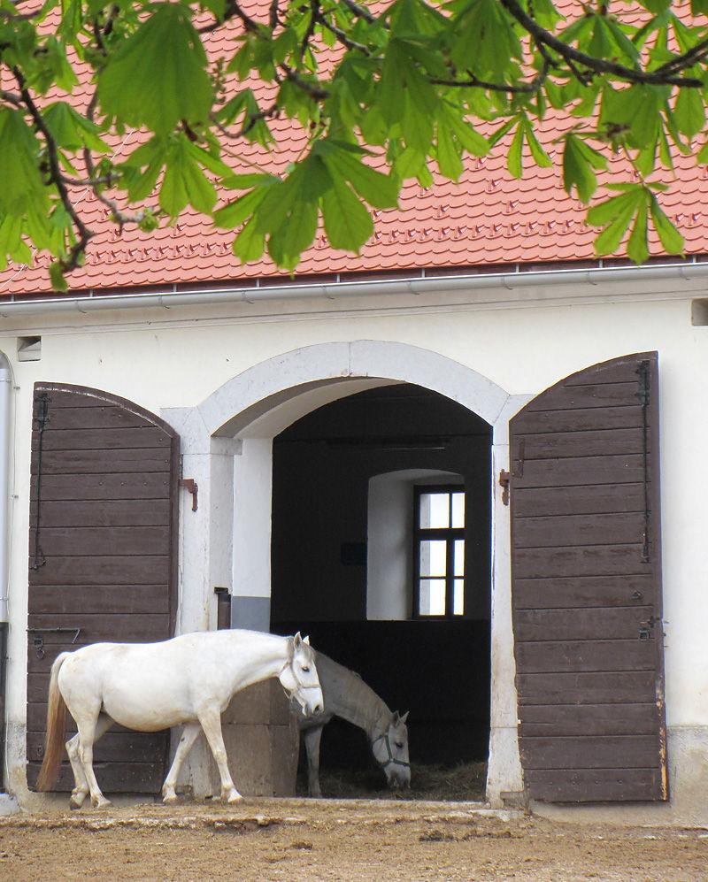 stud farm lipica slovenia